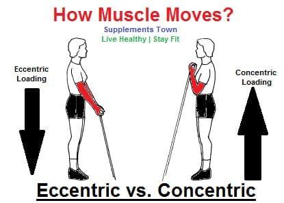 eccentric vs concentric